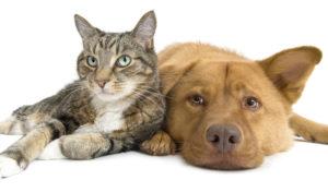 salviette per cani e gatti